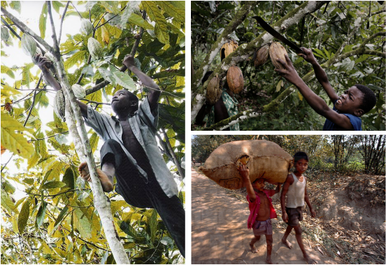 slavery in the chocolate industry Globalization and child labor: mali and others but slavery lingers in africa such as free the slaves and the national child labor coalition are willing to wait another year for the chocolate industry to develop its certification.